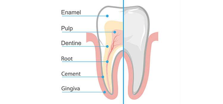 exposed dentin treatment